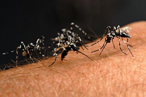 Perché alcune persone non vengono punte dalle zanzare