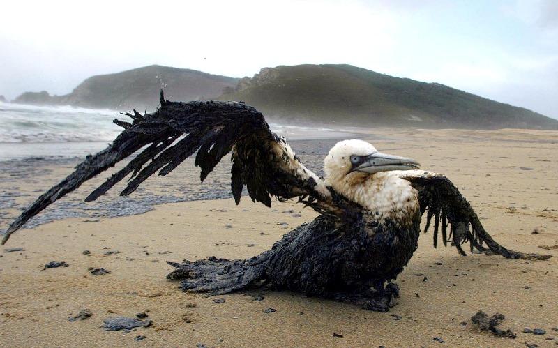 Ambiente a rischio ecco i 5 disastri pi gravi causati - Foto di animali dell oceano ...