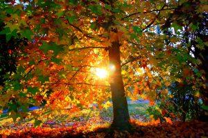 autunno sole 01
