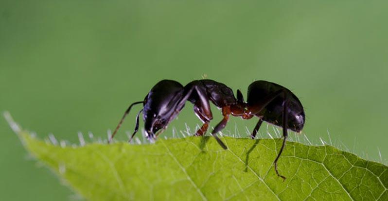 Le super formiche e il loro contributo alla crescita delle for Debellare formiche