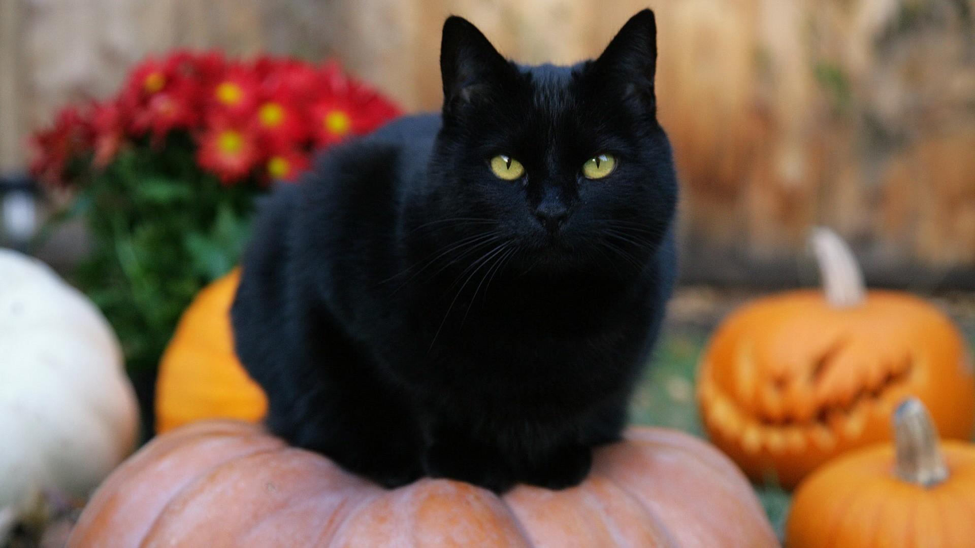 Halloween METEO WEB - Pagina 6 di 13 - Meteo Web bb2838a57947