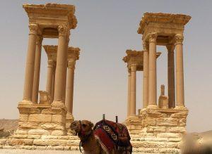 PALMIRA 7
