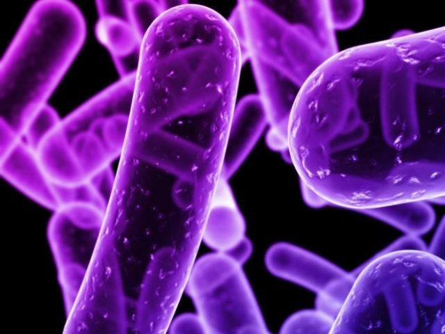 Scoperto nuovo batterio resistente agli antibiotici
