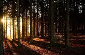 caldo bosco autunno