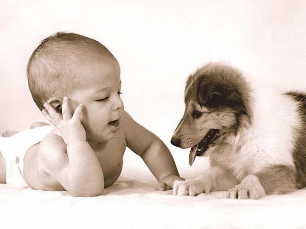 Pediatria Studio Il Cane Scudo Contro Lasma Dei Bimbi Il Gatto