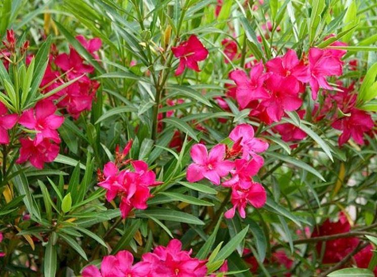 Ecco le 10 piante da appartamento e da giardino pi for Cespugli fioriti da giardino