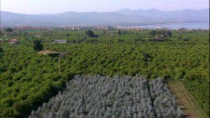 238800936-vigneto-sicilia-campo-agricoltura-albero