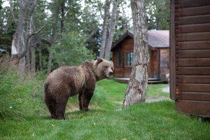 4042_bassa_1_Alaska