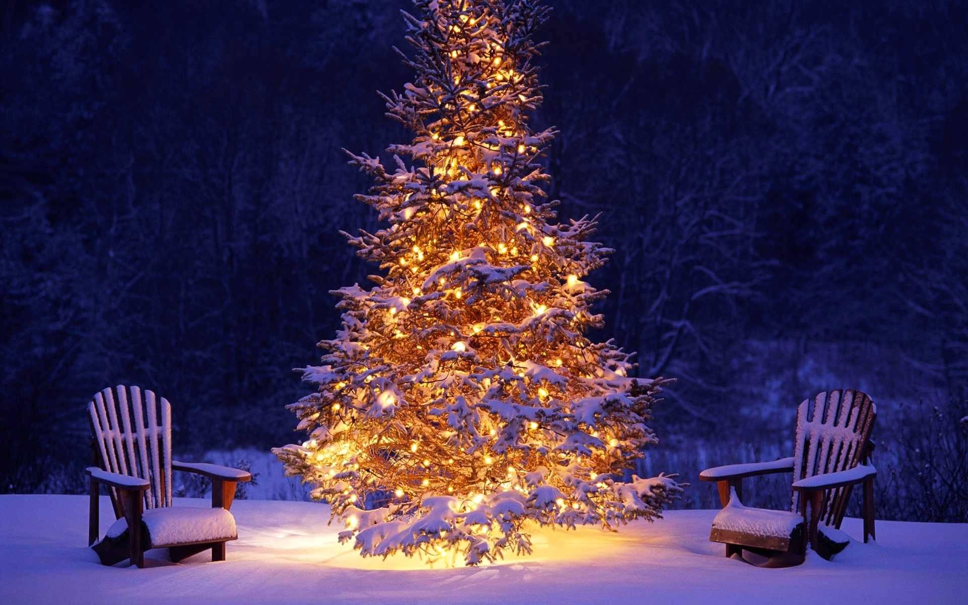 8 Cose Interessanti Sullalbero Di Natale Le Origini La Storia E