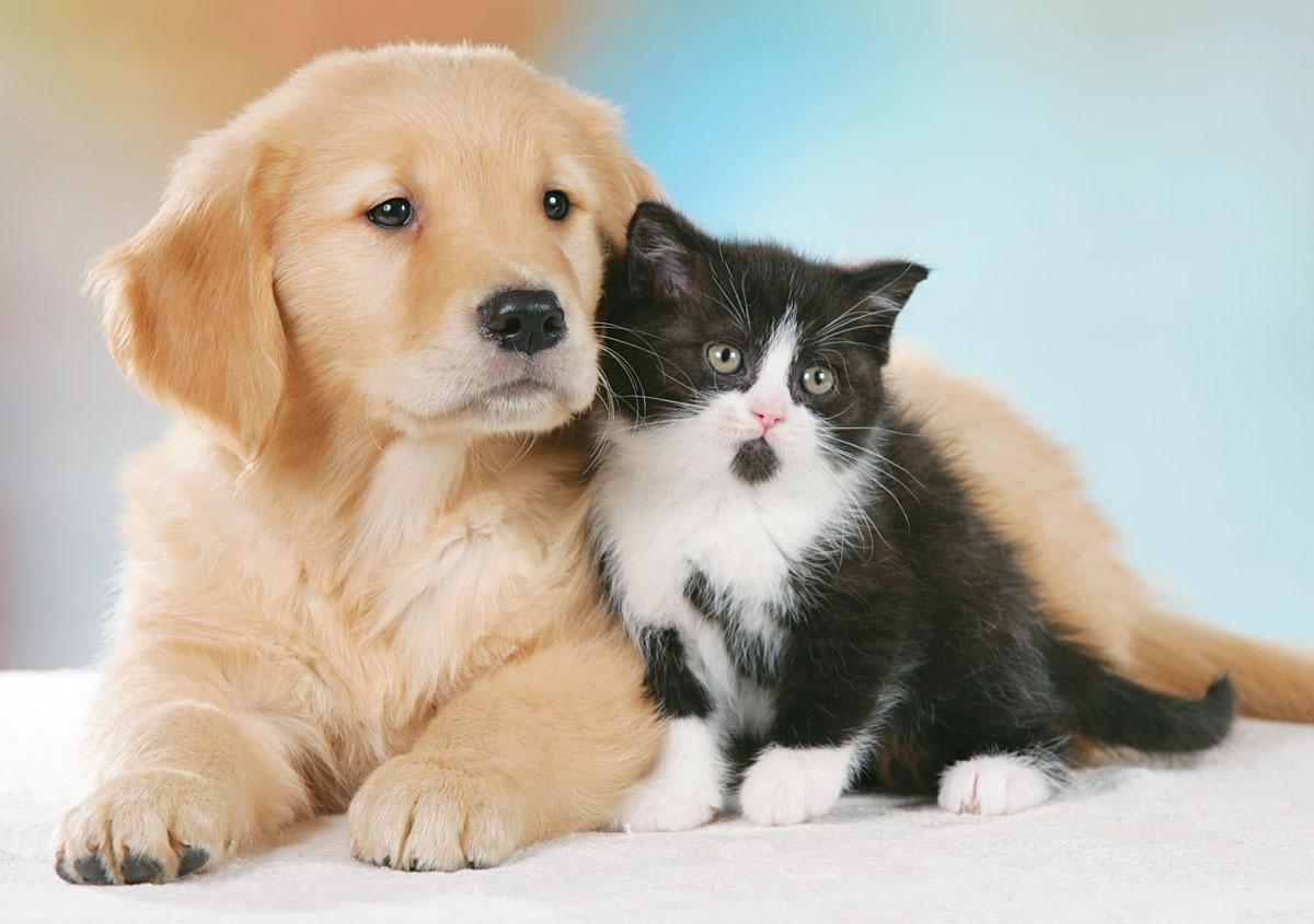 Super AIDAA: inasprire le pene per gli avvelenamenti di cani e gatti  YM14