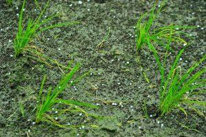 impoverimento-terreni-fertilizzanti-chimici