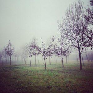 nebbia 02