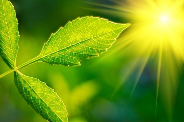Salute: dalle piante una biofabbrica per futuri vaccini