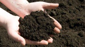suolo