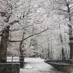 Gelo e neve in Sila, le FOTO dell'inverno calabrese