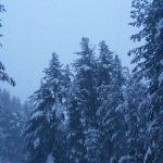 Tanta neve in Sila: le FOTO da San Giovanni in Fiore