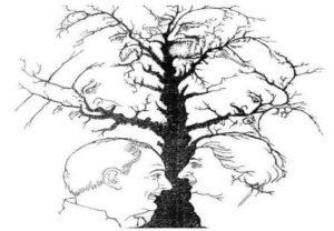 facce dell'albero