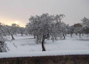 puglia neve trulli alberobello martina franca polignano a mare locorotondo (36)