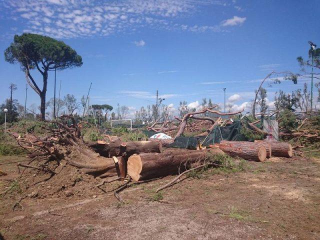 Maltempo firenze i parchi distrutti riprendono vita for Alberi simili alle querce