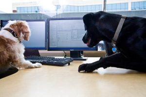 Salute: con il cane in ufficio meno stress, più buonumore e più produttività