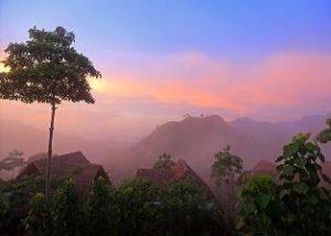4185_web_SriLanka_Albero2
