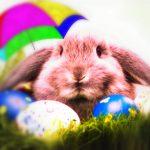 """Auguri di """"Buona Pasqua"""": ecco le immagini più belle da condividere su WhatsApp e Facebook [GALLERY]"""