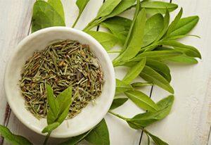 material diversity_green tea