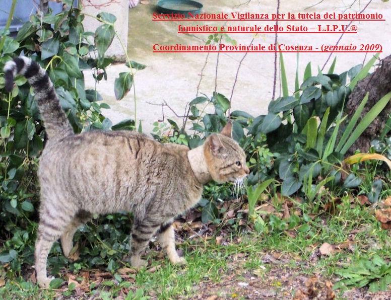 Calabria orrendo animalicidio scoperto a san giovanni in for Meteo san giovanni in fiore