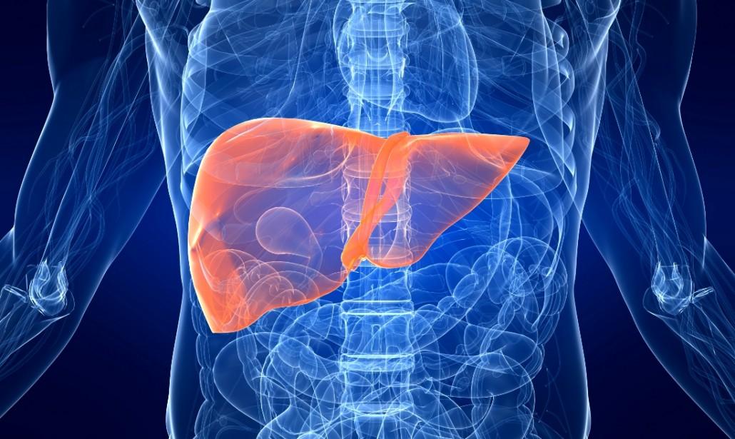 """Medicina: scoperto enzima che """"mette a dieta"""" il fegato grasso"""