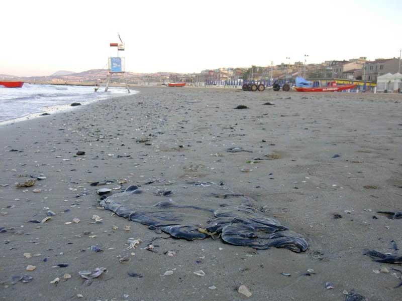 Sversamento petrolio genova recuperato bitume sulla for Disegni moderni della casa sulla spiaggia