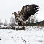 Chernobyl: il ritorno alla natura [FOTO]