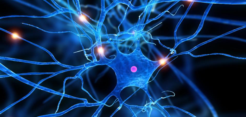 Medicina: una componente neuro-linfo-vascolare nella sclerosi multipla e nell'Alzheimer?