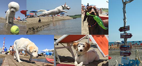 Baubeach riapre la prima spiaggia per cani con numerose - Bagno 46 rimini ...