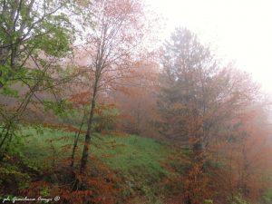 Nei boschi di Pettinascura (P.N. Sila) - foto Gianluca Congi