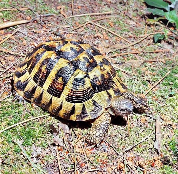 modena salvate 13 tartarughe di terra chiuse in una