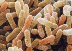 batteri mangia petrolio