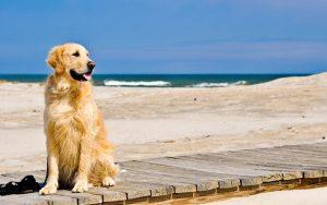 cani-spiaggia-legge