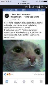 piercing naso gatto