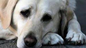 cane-veglia-per-un-giorno-il-padrone-morto-52492.660x368