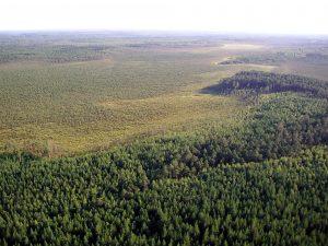foreste siberia
