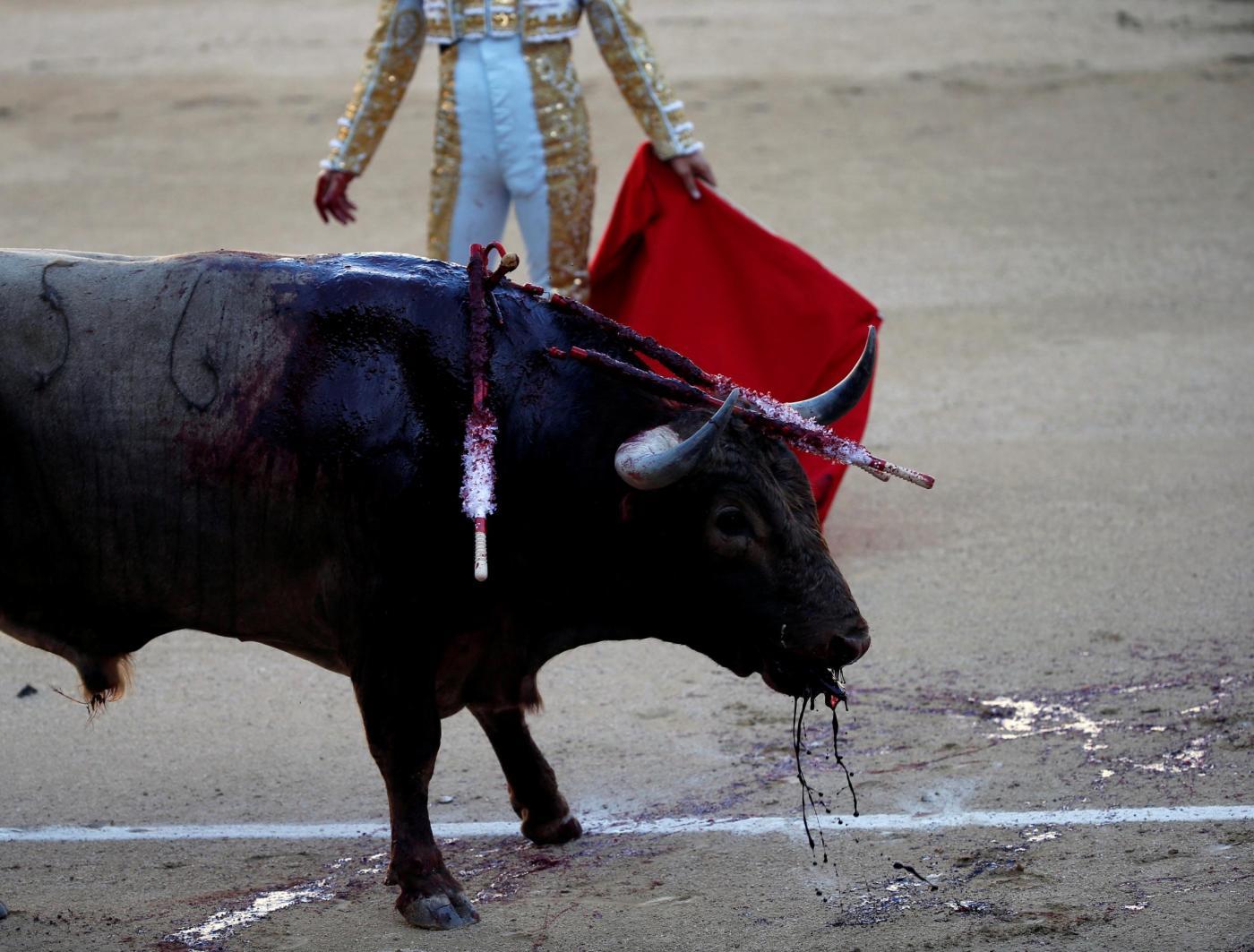 """Spagna, grande attesa a Madrid per la manifestazione degli animalisti: """"proibire le corride"""""""