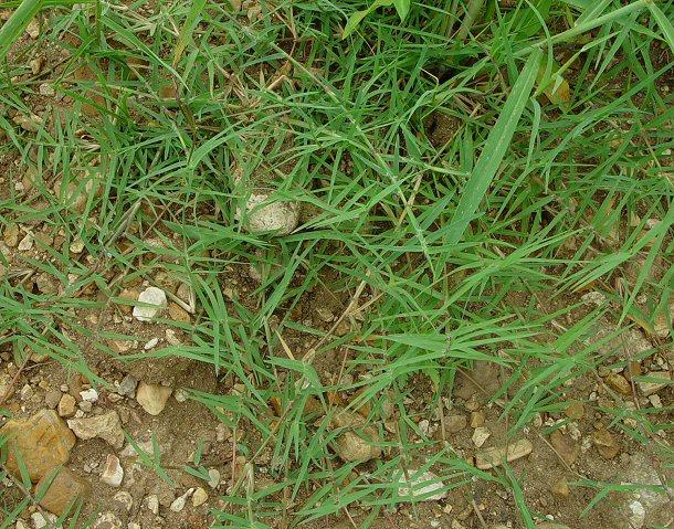 Erbacce ecco come eliminarle dal vostro giardino meteo web - Eliminare topi dal giardino ...