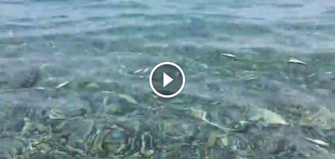 Inspiegabile moria di pesci a montepaone lido cz video for Immagini da colorare di pesci