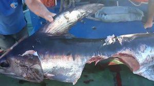 squalo (3)