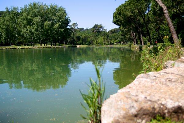 Roma legambiente ripulito il laghetto di villa ada for Pulizia laghetto
