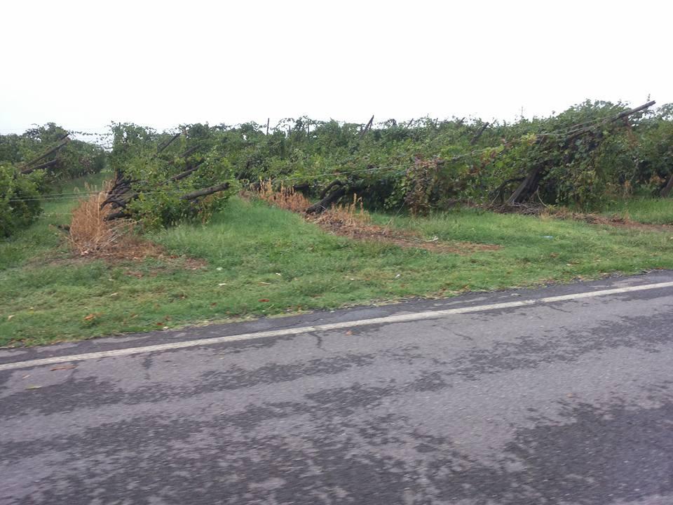 Agricoltura l 39 emilia romagna chiede un fondo di - Il meteo bagno di romagna ...