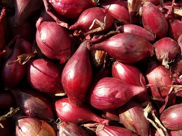 Cipolla rossa di Tropea: un tripudio di proprietà benefiche
