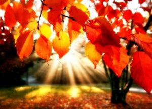 Equinozio autunno 2017: ecco perché è domani 22 settembre e non oggi 21 settembre