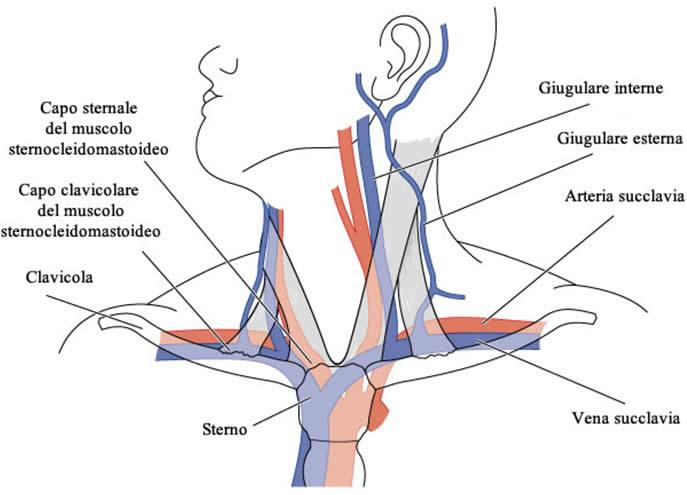 Varicosity sotto i sintomi del braccio