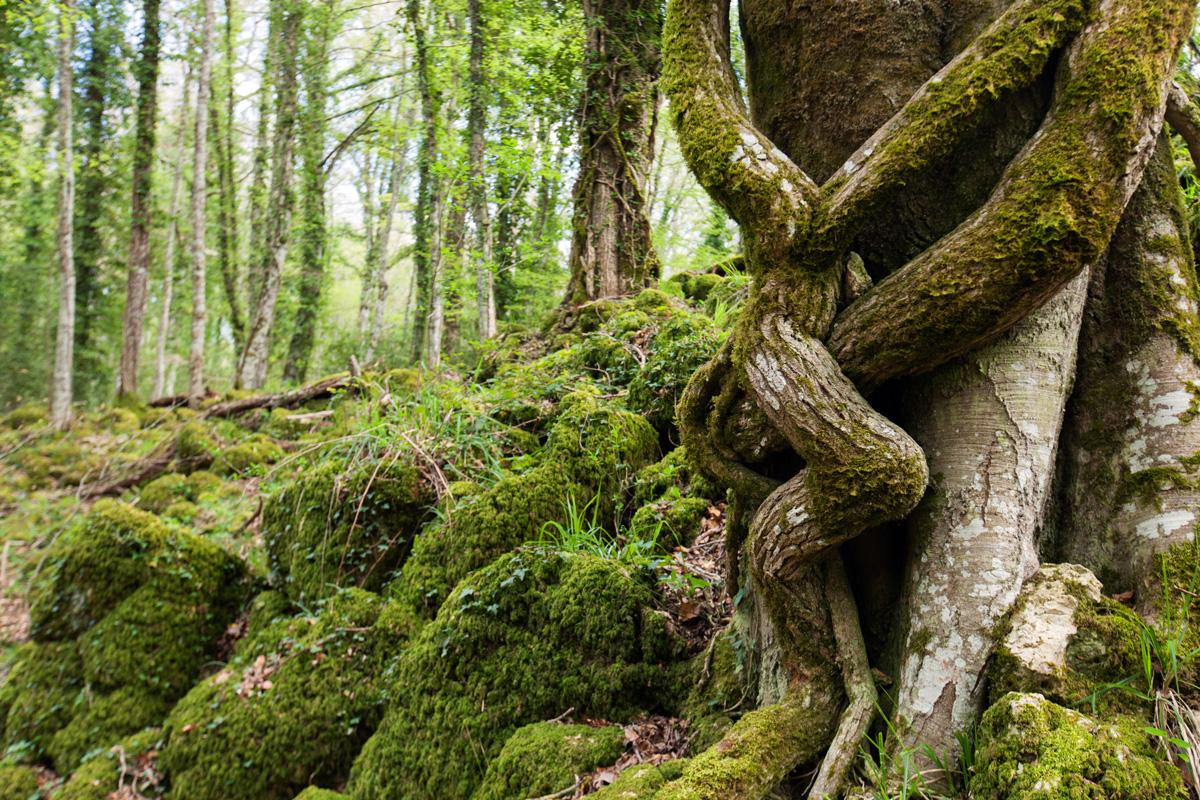 Viaggio nella foresta umbra il polmone verde del parco for Pianta della foresta di pioppo
